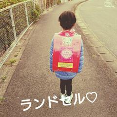 フィットちゃん/チェリーピンク/入学準備/新一年生/ランドセル ランドセル🎒 娘が自分で選びました♡