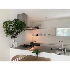 LIMIAインテリア部/キッチン/住まい/アセビ/植物 アセビの存在感が好きです。