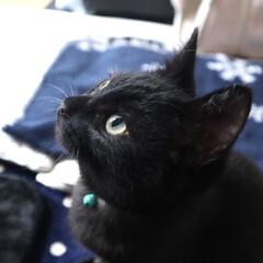 ねこ/うちの子ベストショット/黒猫/ペット/ねこ好き/LIMIAペット同好会/... 爪とぎタワーの上のねずみさんに、真剣な眼…