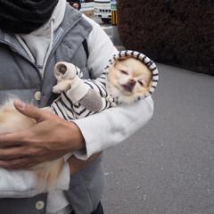 うちの子/愛犬/チワワ/LIMIAペット同好会/ペット/ペット仲間募集/... この抱っこが好きで背中をぽんぽんするとす…