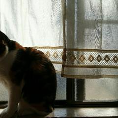 ペット仲間募集/うちの子ベストショット 窓辺でノスタルジックに…♡