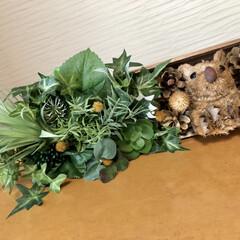 松ぼっくり/壁掛けグリーン/木箱リメイク/ハリネズミ/フェイクグリーン/雑貨/... リクエストにお応えして木箱で作りました。…