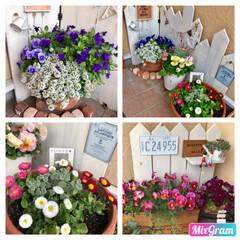 寄せ植え/フォロー大歓迎/GW/雑貨/DIY/暮らし/... 長い間、楽しませてもらった 春のお花もそ…