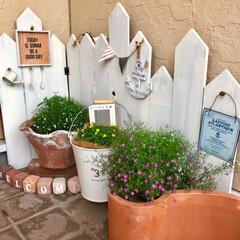 花のある暮らし/かすみ草/フォロー大歓迎/LIMIAインテリア部/ハンドメイド/風景/... かすみ草を植えました。 昔ながらの普通の…