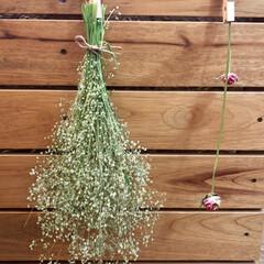 雑草/ドライフラワーのある暮らし/ドライフラワー/令和元年フォト投稿キャンペーン/フォロー大歓迎/LIMIAインテリア部/... 家の裏の小さなお花がついてる、 雑草を束…