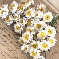 花のある暮らし/花かんざし/おすすめアイテム/暮らし 花かんざしをいっぱい摘みました。 ドライ…