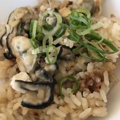 ホットケーキミックス/サーターアンダギー/牡蠣ご飯/牡蠣/かきおこ/フォロー大歓迎/... 牡蠣の剥き身を1キロ買って、3日連続牡蠣…