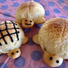 パン/手作りパン/メロンパン/かめメロンパン/新生活/お弁当/... かめメロンパン焼きました。 ちょっと大き…