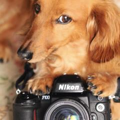 カメラマン/カメラ/わんこ/ミニチュアダックス/LIMIAペット同好会/ペット/... トロンカメラマンさん🐾 キレイに撮ってね…