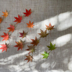 秋の葉/モミジ/紅葉/もみじ/カエデ/シンボルツリー/... 庭の紅葉を色とりどり集めてみました^^