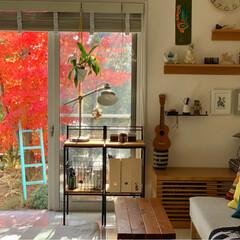 暮らしを楽しむ/北欧雑貨/北欧ナチュラル/北欧インテリア/窓からの眺め/庭のある暮らし/... 部屋から眺める紅葉🍁 短い間の癒しです☺️
