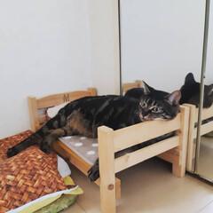 猫族neko-zoku/おすすめアイテム/LIMIAペット同好会/にゃんこ同好会/至福のひととき/LIMIA手作りし隊/... [たまにはベッドで寝るかニャン] Hok…