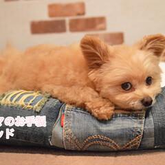 ジーンズ/手作り/お裁縫/ハンドメイド/リメイク/犬用ベッド/... 私の履いてたジーンズのリメイクで 犬用ベ…