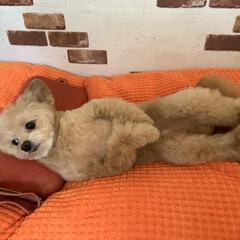氷枕 ダンロップ 安定型 コンパクト / 水枕(その他キッチン、日用品、文具)を使ったクチコミ「暑い夜には氷枕(∩´∀`∩)人間みたいに…」