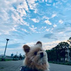 いまそら/雲/空/夏空/犬派/LIMIAファンクラブ/... 今日空 夏の空だね(๑•ω•๑)