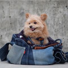 パッチワーク/岡山デニム/バッグ/ドッグスリング/araiyan/癒し/... 僕がモデルした このバッグが楽天に出てる…