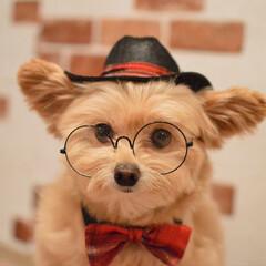 犬用雑貨/癒し/可愛い/犬/モデル犬/ころすけ/... お友達にプレゼントしてもらった帽子とネク…