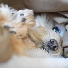 ころすけ/ポメプー/一眼レフのある暮らし/一眼レフ/一眼レフのある生活/犬派/... おはよう。 今日も暑そう💦