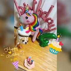 お誕生日/LIMIA/LIMIAファンクラブ/LIMIAおでかけ部/LIMIAファン/LIMIAぺット同好会/... たるちゃん4歳のお誕生日でした🎂 バタバ…(1枚目)