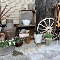 ビオラ/モスポット/花かんざし/木箱DIY/雑貨好き/ガーデンフォーク/... 先週末に花かんざしとモスポットを購入しま…