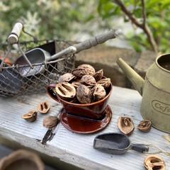 コーヒードリッパー/ガーデン雑貨/の殻/くるみ/くるカラ/庭/... フチが欠けてしまった陶器製のコーヒードリ…(1枚目)