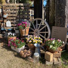 車輪オブジェ/枕木/ガーデン雑貨/ガーデニング/プラチーナ/ガーデンシクラメン/... 今日は天気が良かったので久しぶりに庭いじ…