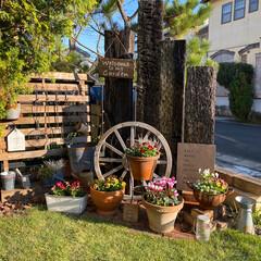 建売住宅/寄せ植え/雑貨好き/エクステリア/立水栓/サークルストーン/... 今年の夏は暑すぎたので花も買わず放置気味…