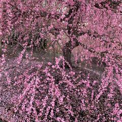 小さい春 (4枚目)