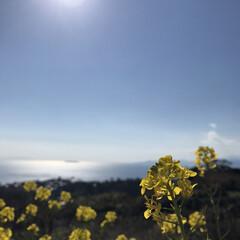 菜の花/田舎の魅力 小さな幸せ。(1枚目)