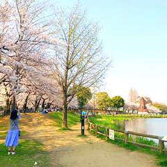 公園/春/桜/小さい春/池/風車/... 浮間公園にて♪