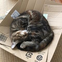 おやすみショット 空き箱大好き💕 そしてそこで寝るのも大好…