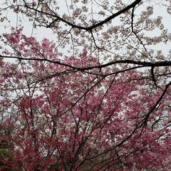 春の一枚 いろいろピンクで春満喫