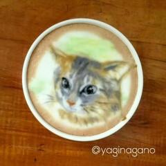 ラテアート/パックちゃん/マロンちゃん/プリンちゃん/インスタも宜しく/猫大好き/... インスタの@yaginagano さんの…(3枚目)