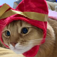 nekonobi/ネコジャポン/ソマリ/猫大好き/インスタも宜しく/プリンちゃん/... にゃんずから日頃の感謝を込めて、ホワイト…(3枚目)
