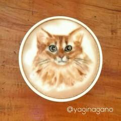 ラテアート/パックちゃん/マロンちゃん/プリンちゃん/インスタも宜しく/猫大好き/... インスタの@yaginagano さんの…(2枚目)