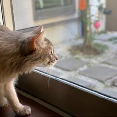 パックちゃん/インスタも宜しく/猫大好き/ソマリ/ネコジャポン/nekonobi/... にゃにかいたにゃ😻😻👍ニャコムはお任せに…
