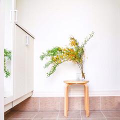 玄関/花のある暮らし/インテリア/ニトリ/イケア/春の一枚 コデマリを買ってきてそのままフラワーベー…