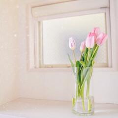 玄関/ホワイトインテリア/花のある暮らし/ニトリ/はじめてフォト投稿 玄関にはいつもお花を置いています。 季節…