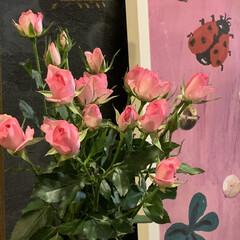 花のある暮らし/雑貨/暮らし おはようございます。😊 一日遅れの母の日…