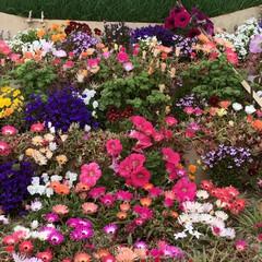 海の中道海浜公園/LIMIAおでかけ部 癒しの一枚。花のある暮らしに憧れて。💐