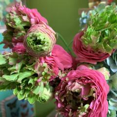 久山植木/ラナンキュラス/花のある暮らし/キッチン/雑貨/住まい/... こんな時期だからこそお花を飾ろう!🌸💕🎶…