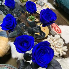 花のある暮らし/青い薔薇 昨日、久山植木で買った青い薔薇。写真加工…