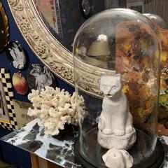 ブロカント/アンティーク/ガラスドーム/LIMIAインテリア部/雑貨/暮らし/... 大切な物はガラスドームに…が私流。💕  …