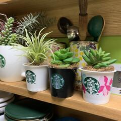 壁紙屋本舗さん/セルフペイントの壁/無印良品の壁に取り付ける家具/簡単アレンジ/フェイクグリーン/いなざうるす屋さん/... スタバのプリンカップを利用して、いなざう…