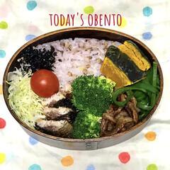 ピーマンオイスターソース和え/いわしのごま焼き/雑穀米弁当/曲げわっぱ弁当/節約生活/お昼ご飯/... おはようございます。 寒い💦行ってきます😊