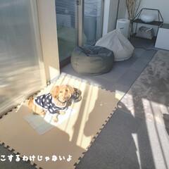犬との暮らし/マルックス/ミックス犬/ケージ/ケージの掃除/毎日こそうじ/... こんばんは😃🌃 . . 手の痒みとあかぎ…(9枚目)