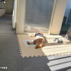 犬との暮らし/マルックス/ミックス犬/ケージ/ケージの掃除/毎日こそうじ/... こんばんは😃🌃 . . 手の痒みとあかぎ…(10枚目)
