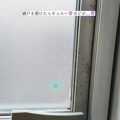 掃除/窓網戸用おそうじクロス/そうじの神様/ホームリセット/パストリーゼ/窓拭き/... こんばんは🌃 . . 今日のこそうじは、…(4枚目)