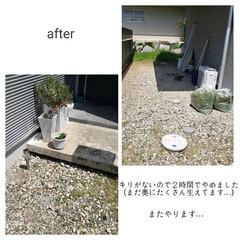 ウタマロクリーナー/草取り/ゴミ箱の掃除/毎日こそうじ/こそうじ こんばんは🌃 . . 今日のこそうじは、…(7枚目)