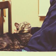 猫派の旦那と犬派のわたし/LIMIAペット同好会/フォロー大歓迎/ペット/ペット仲間募集/猫/... 女子力🎀MAXの甘々モード (まるたん大…